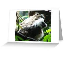 Tamarin monkey Greeting Card