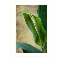 Lily Buds & Texture Art Print