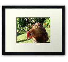 Fabulous chickens! Framed Print