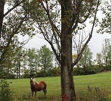 R3 - Basil's horse and poplar tree by Christina Adams