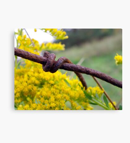 Rusty but Strong Canvas Print