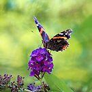 Butterfly by Carrie Bonham