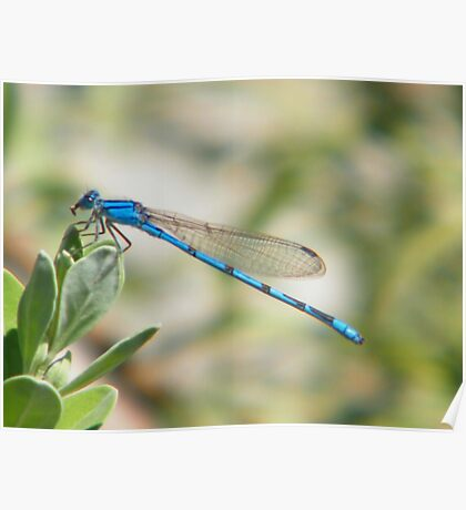 Lonely Dragonfly Poster