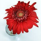 Daisy In Red by SuddenJim