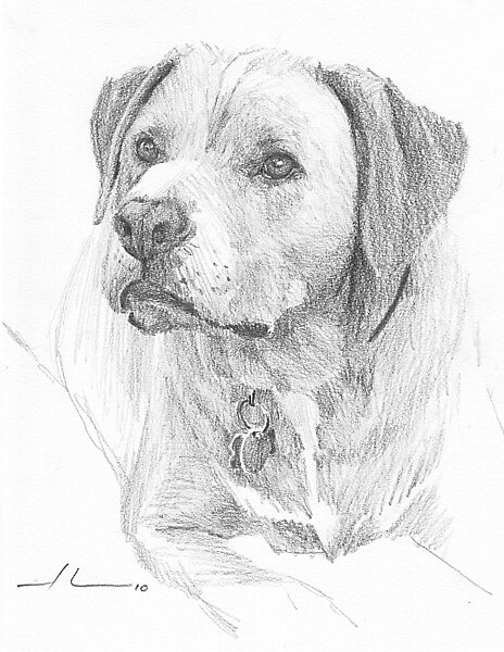 Yellow lab by Mike Theuer