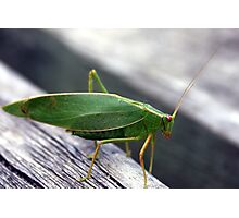 A green insect Photographic Print