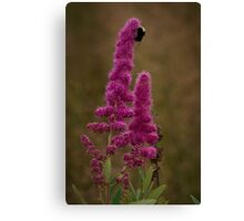 Bumble Bee Canvas Print