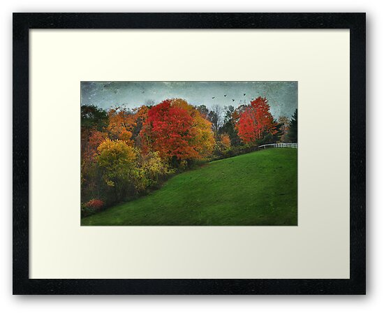 A New England Autumn by Barbara Manis