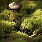 Among the Moss by Pam Hogg