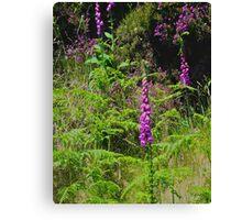 Irish Flowers - Purple Foxgloves Canvas Print
