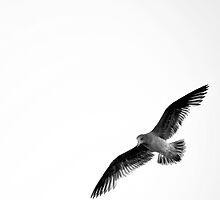 the joy of flight by Georgie Hart