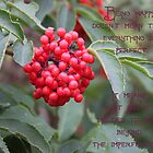 Elderberry blossom with quote. by Sandra Foster