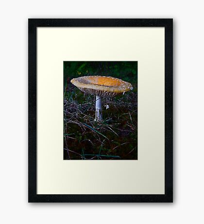 Mushroom Kingdom (7409) Framed Print