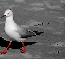 Red Legged Seagull by goodieg