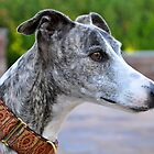 The Prince - whippet by Kim North