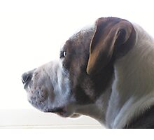 Buster Photographic Print