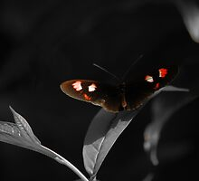 Butterfly by nitsmule
