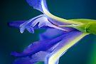 Iris up close by Renee Hubbard Fine Art Photography