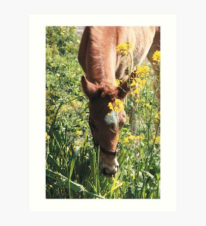 Happy Foal Art Print