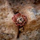 Stone Flower by Murat A CICEK