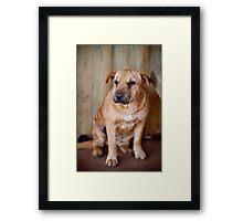 Community Dog Framed Print