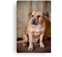 Community Dog Canvas Print