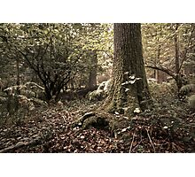 Woodland Mystery  Photographic Print