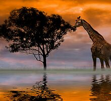 Giraffe at Sunset by Anthony M. Davis