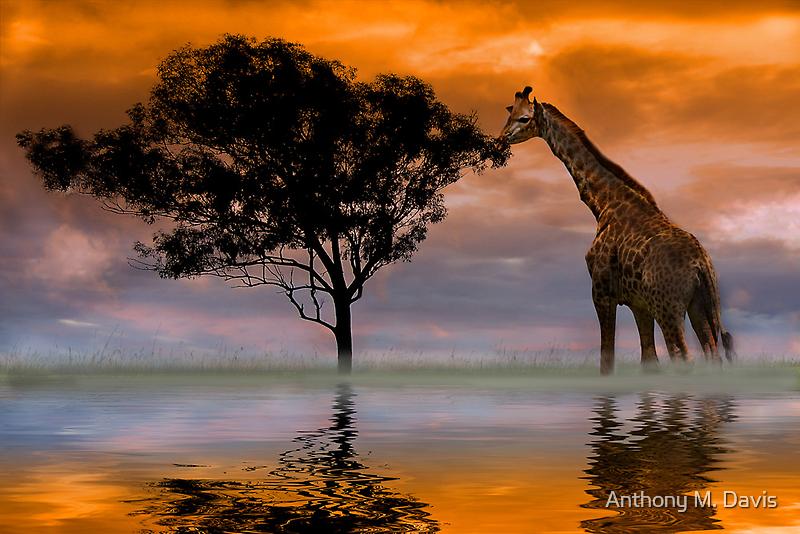 Giraffe at Sunset by Anthony M. Davis