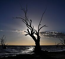River Red Gums by Fred  Smith