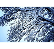 Snow Tree Photographic Print
