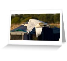 Spoonbill at Montecollina Bore Greeting Card