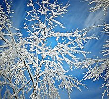 Snowy Tree by Anthony M. Davis