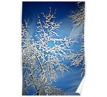 Snowy Tree Poster
