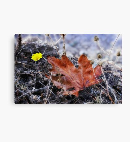 Double Springs Canvas Print