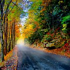 Autumn Road by Anthony M. Davis