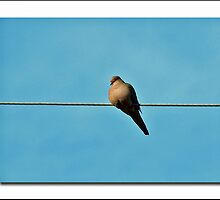 Bird on a Wire by Bine