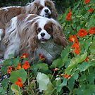 Two Terrors Tiptoeing through the Nasturtiums by BronReid