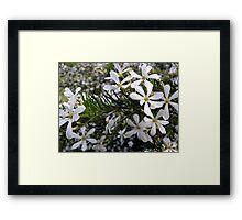 White Bride Framed Print