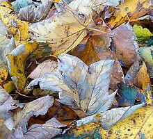 Changing Seasons, Autumn Leaves by nicfarrington