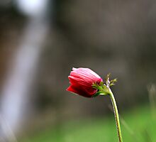 Cemre: The First Sign of Spring by Murat A CICEK