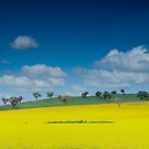 A farmers paint palette in Panorama by Mark Elshout