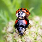 Making more ladybirds by Rachael Talibart