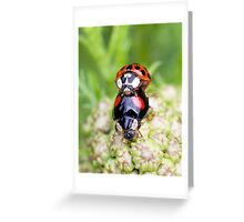 Making more ladybirds Greeting Card