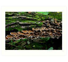 Shelf Fungus Art Print