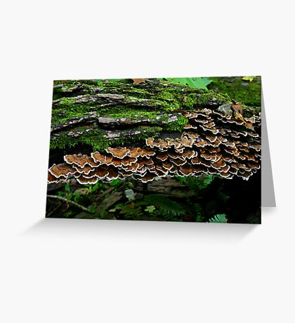 Shelf Fungus Greeting Card
