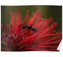 ANTagonizing on Red Poster