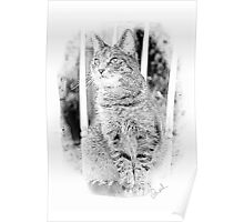 Tabby Cat Pencil Sketch Poster