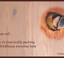 Haiku - Drum Roll by steppeland