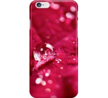 Poinsettias iPhone Case/Skin